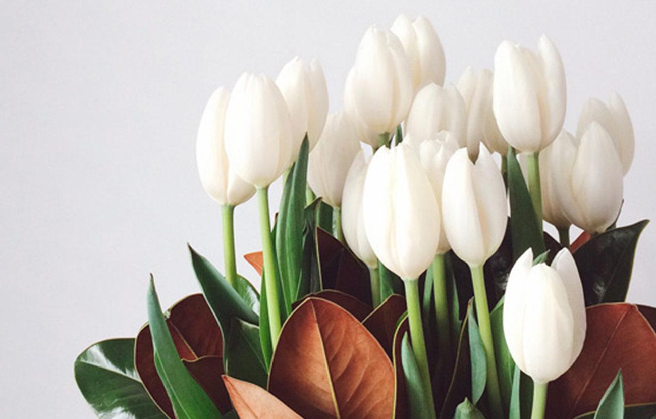Van VLIET Flower Group - Paauw Lilies
