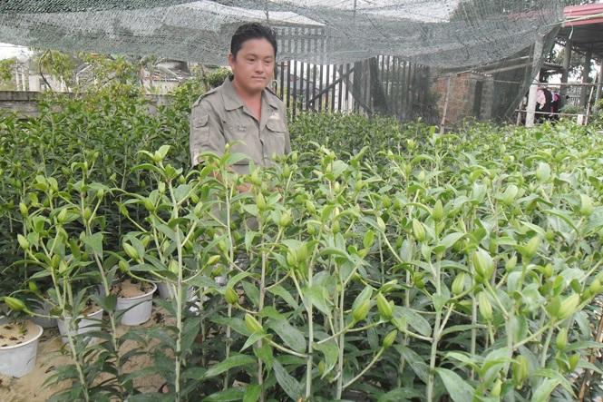 Làm giàu nhờ trồng hoa