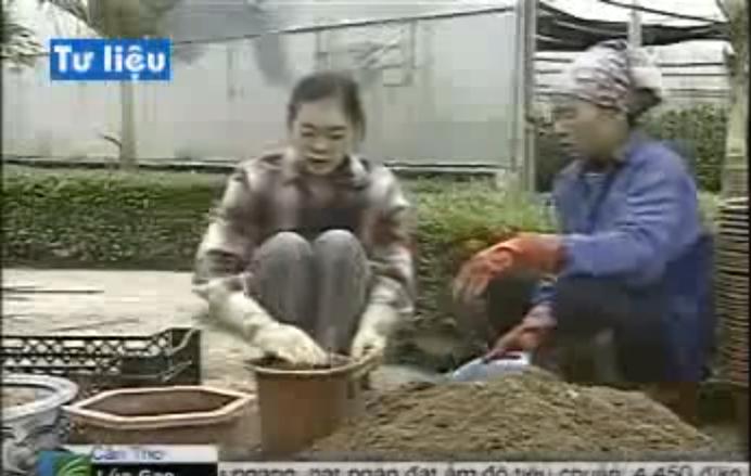 Kỹ thuật trồng hoa ly trong chậu