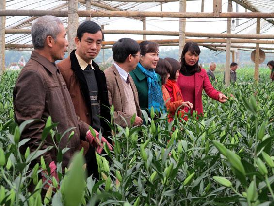 Đánh giá kết quả Dự án phát triển sản xuất hoa ly chất lượng cao tại Thái Nguyên