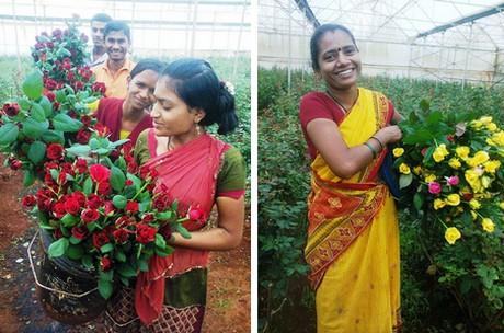 Phần 3: Sản xuất hoa ở Ấn Độ - Ngành công nghiệp
